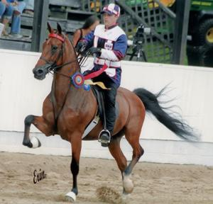 WC Where Are We Now - 2009 World Champion Road Horse Under Saddle